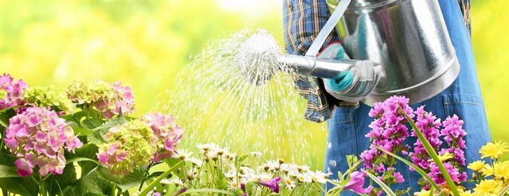 Woda w ogrodnictwie – czy wymaga uzdatniania?