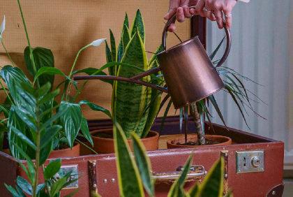 Twarda woda a podlewanie roślin doniczkowych